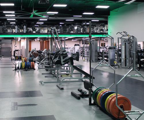 Muscle Motivation
